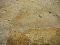 Wilgoc, grzyby i pleśń na ścianach w domu - jak usunąć