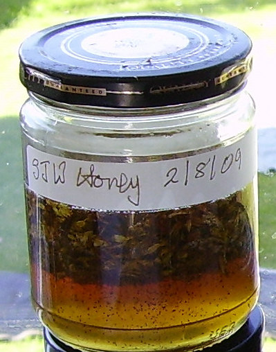 SJW honey after 2 weeks infusing