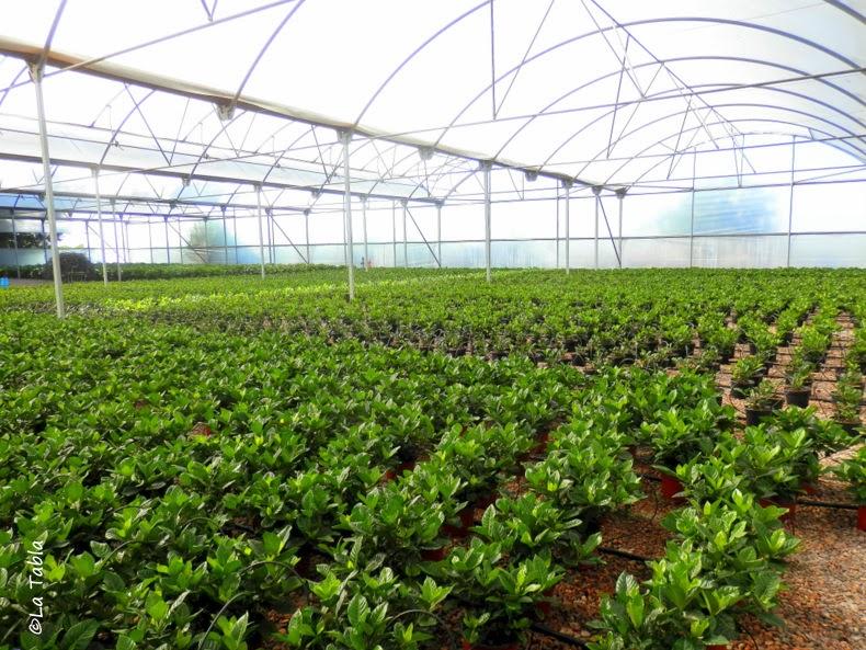Qu es un vivero de producci n de plantas ornamentales for Produccion de viveros