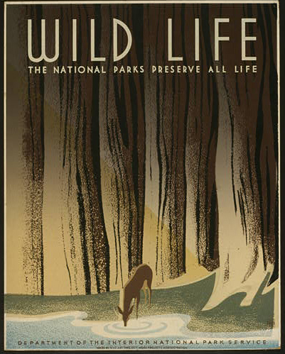 wildlife, vintage, vintage posters, classic posters, retro prints, graphic design, deer, trees, national park, Wild Life - The National Parks Preserve All Life Vintage Poster - Dept of Interior National Park Service