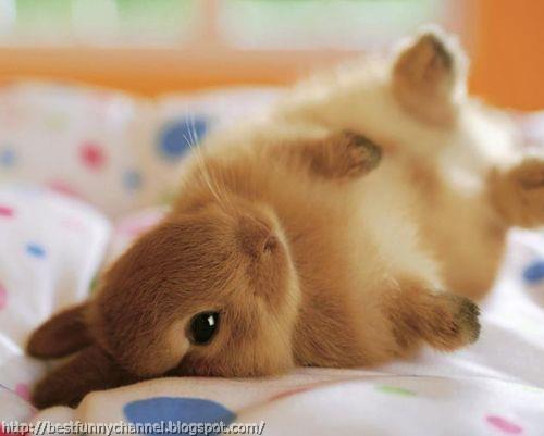 Nice bunny.