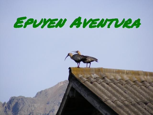Bandurrias - Patagonia Andina