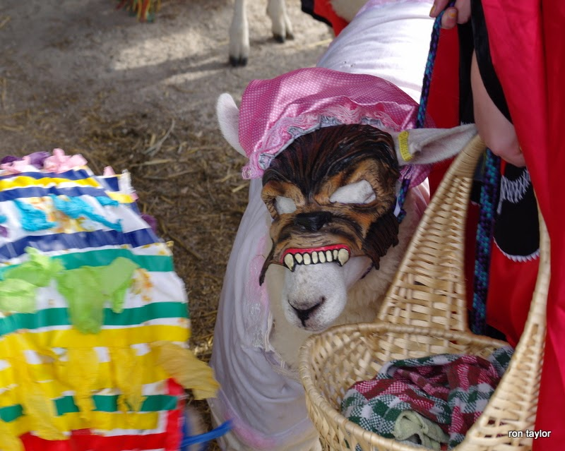Events at Summer Fairs