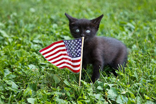 black kitten on green grass with small American flag