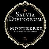 Salvia Monterrey