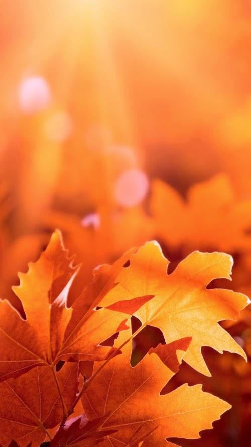Autumn iPhone 6 Wallpaper hd