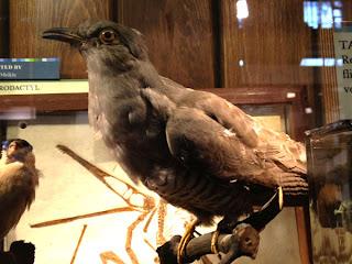 Bird Exhibit - Sketchbook - Grant Museum of Zoology Field Trip London - Arts Award Bronze Level Art Portfolio Ideas