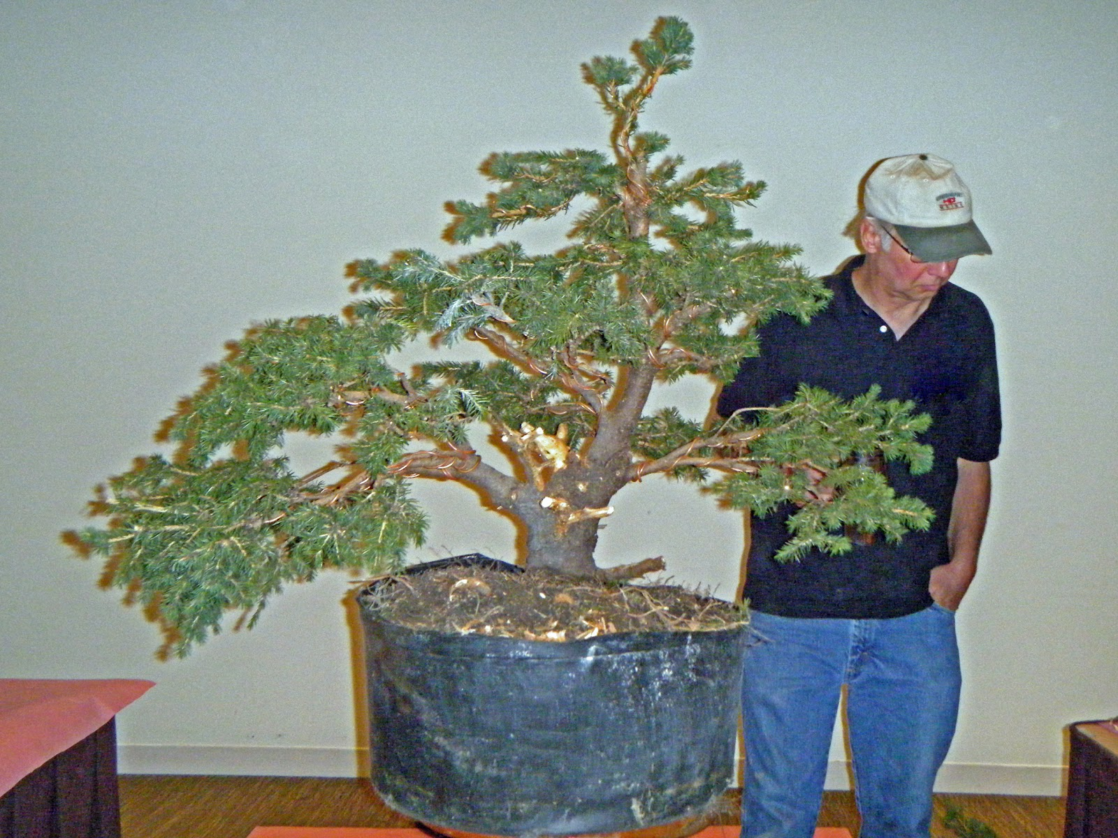 Bonsai In Hoosierland Mid America Show Part 2 The Taming Of The
