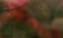 http://i830.photobucket.com/albums/zz221/Rosesylla/4_zps4d00040a.png