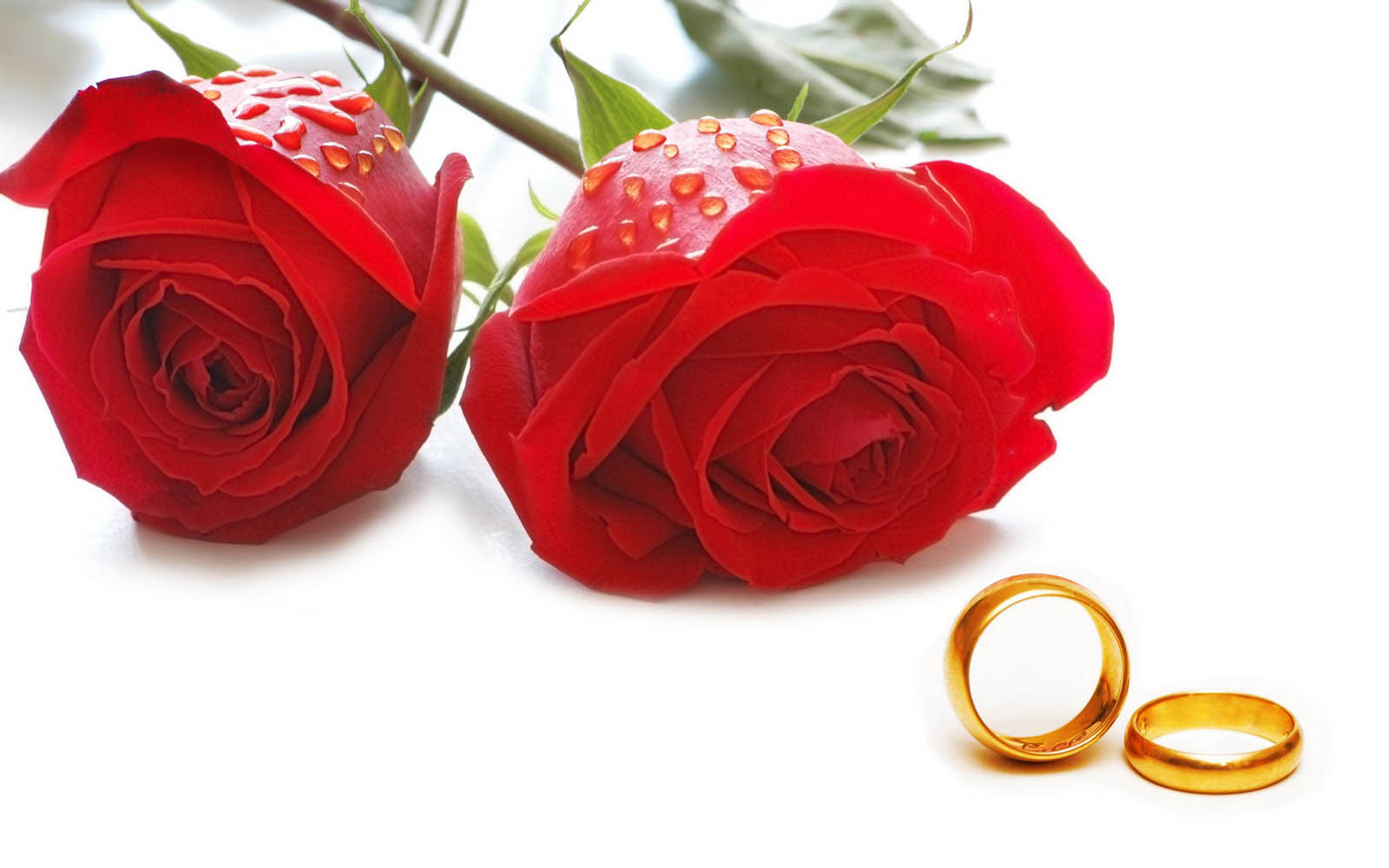 Flowers Love Wallpapers Love Ring Wid Red Rose Flower