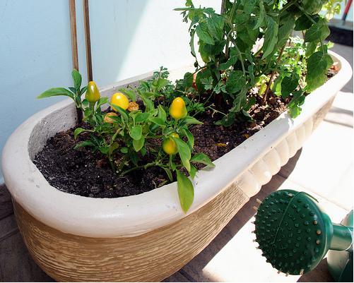 mini jardim de temperos : mini jardim de temperos:Eco Hortas: MINI HORTAS e seus benefícios