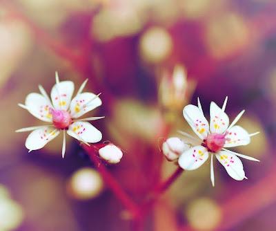 24 imágenes de amor (corazones, flores y mensajes)
