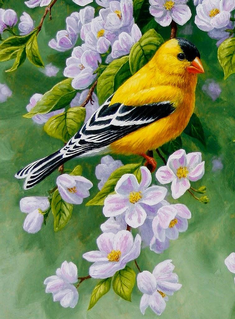 imagenes-de-flores-y-aves