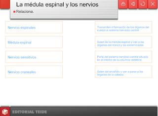 LA MÉDULA ESPINAL Y LOS NERVIOS - ACTIVIDADES