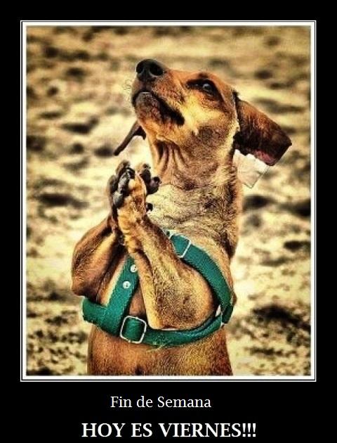 imagenes chistosas feliz viernes - Imagenes chistosas para etiquetar Facebook