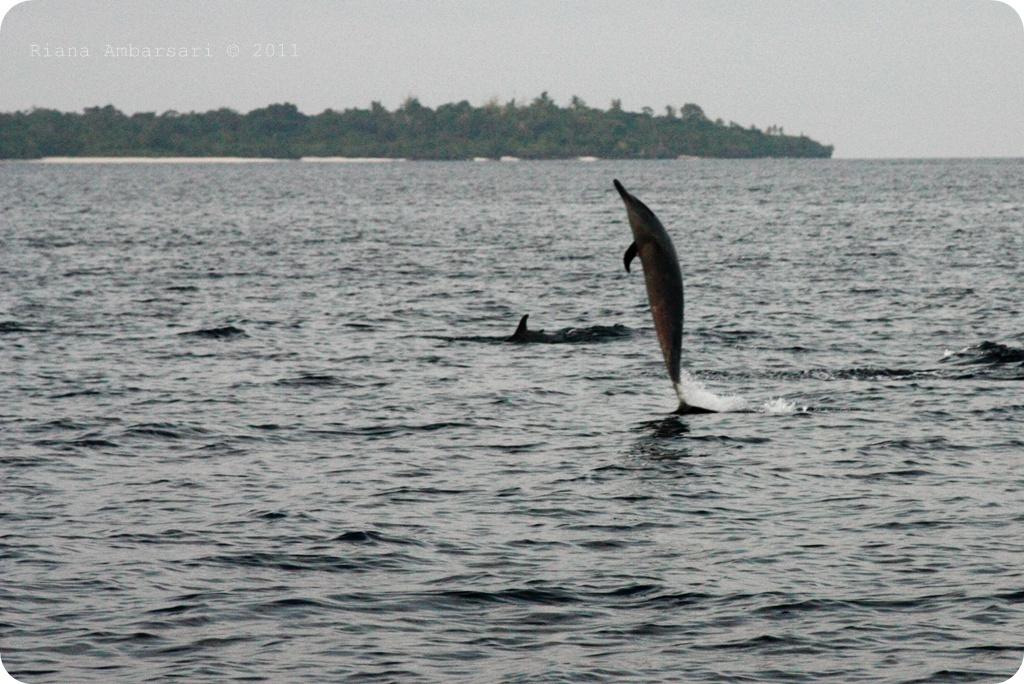 Lumba-Lumba di Perairan Pulau Kapota