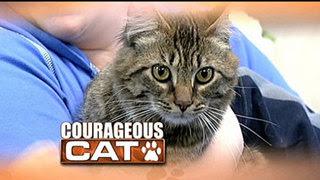 Chase, kucing yang selamat dari kebakaran yang menghanguskan rumahnya