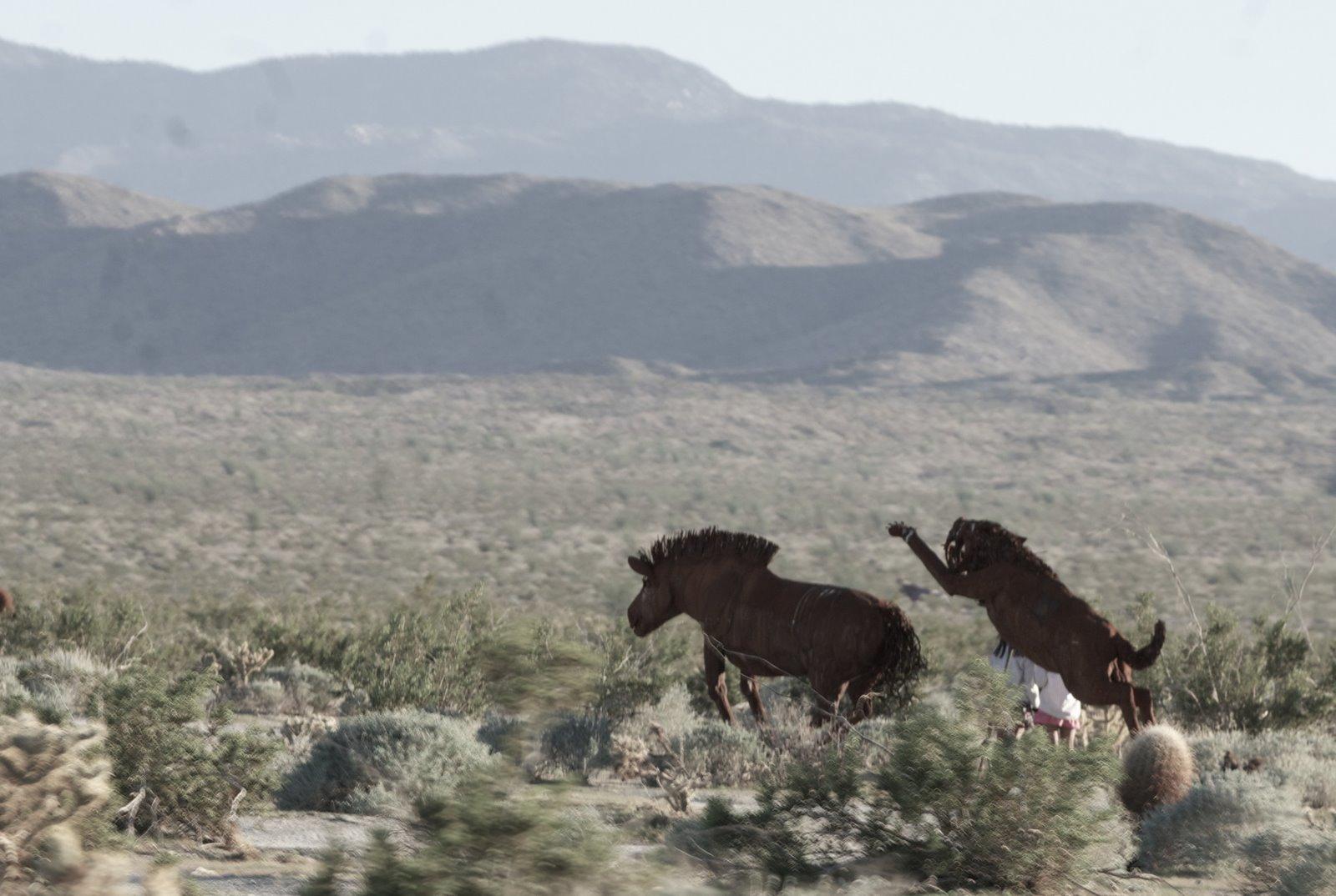 Animal Zoo Life:  Desert animals Desert animal Desert animals list ...