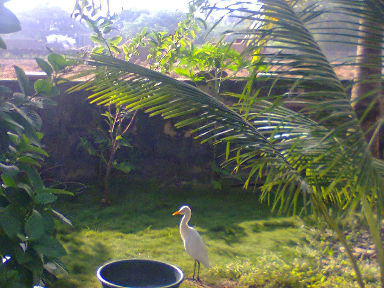 nice bird lovely image at my home