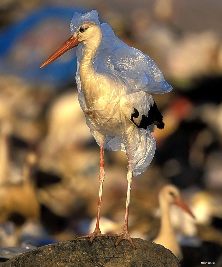 #8 Stork Trapped In Plastic - 22 Heartbreaking Photos Of Pollution That Will Inspire You To Recycle