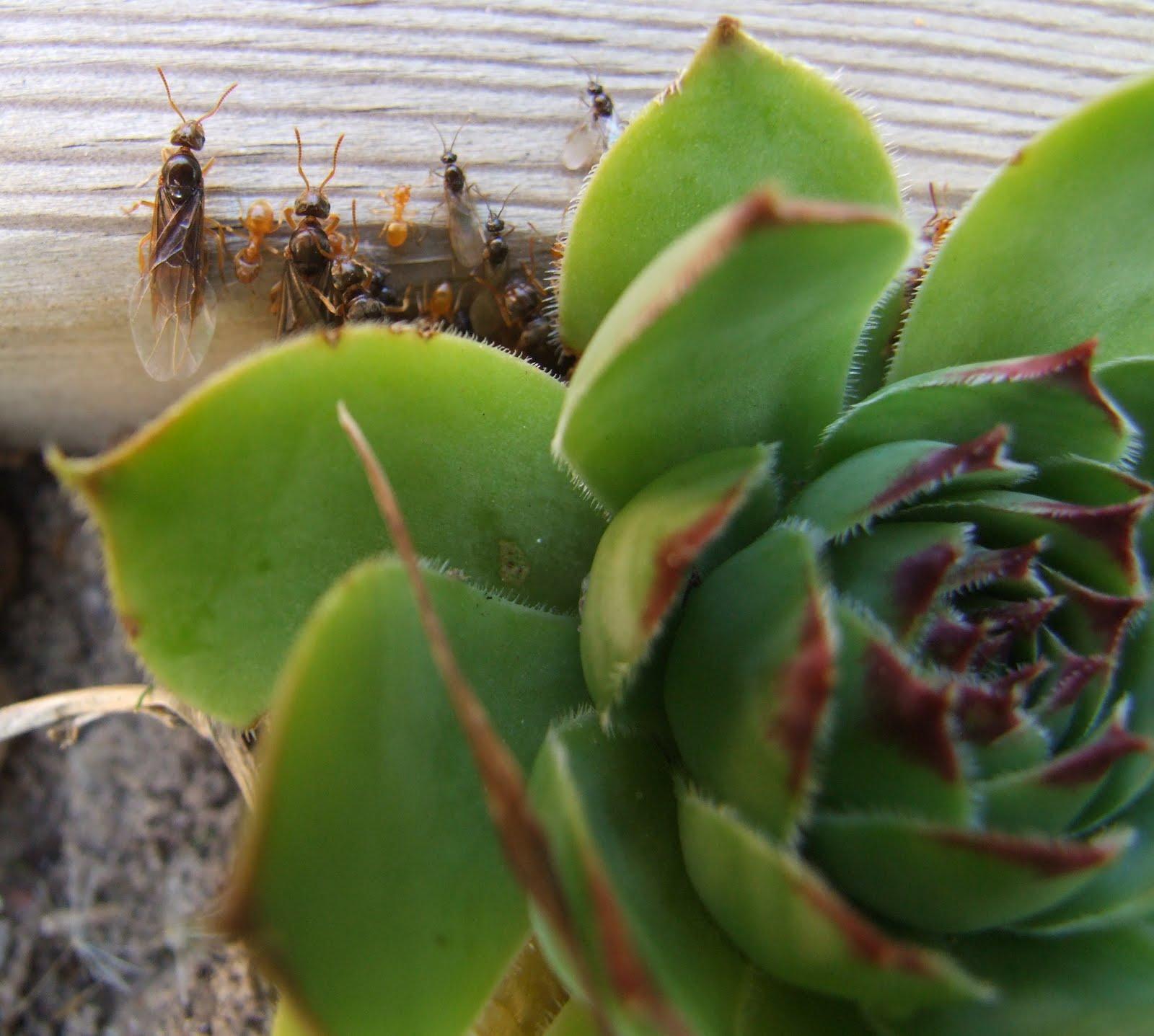 La biodiversit de mon jardin ou comment pr server et - Comment se debarrasser des fourmis au jardin ...