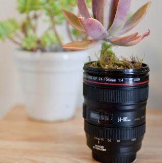 10 maneiras de reciclar lentes fotográficas, vaso de plantas