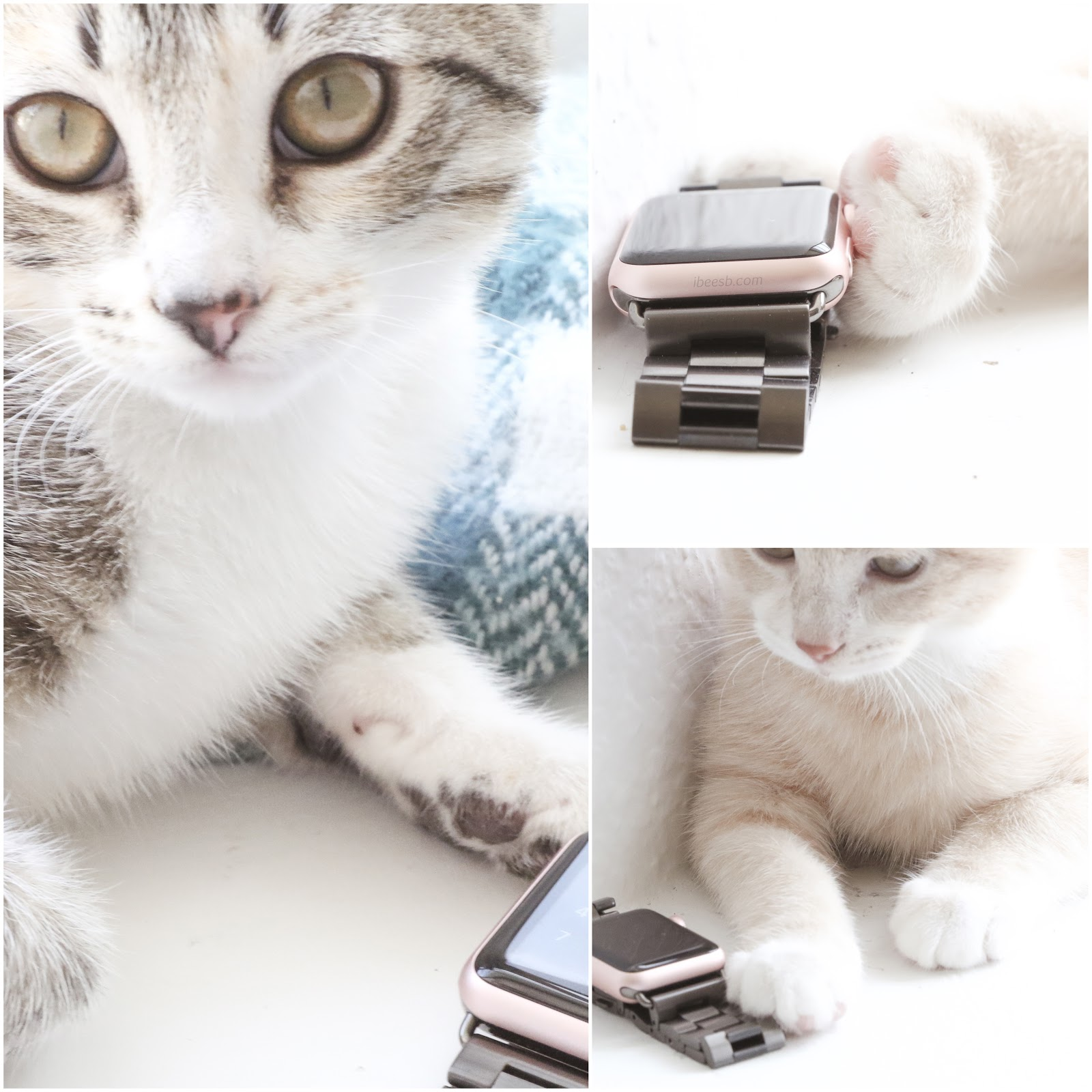 Cats and Apple Watch