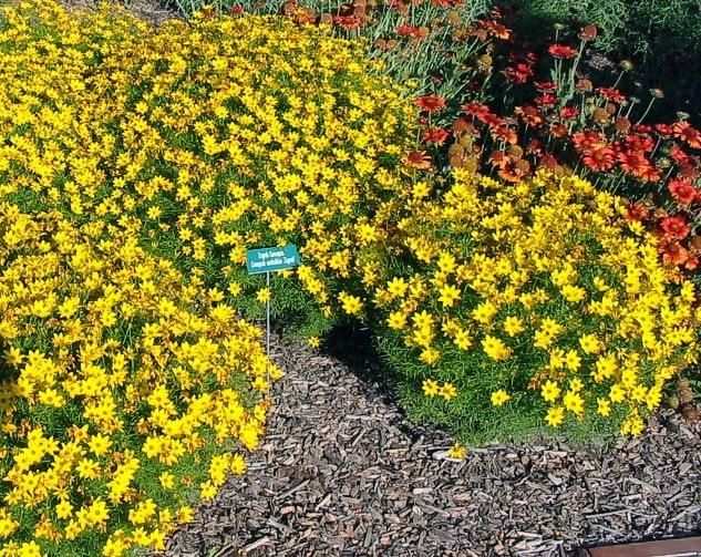 Clases de flores amarillas flores amarillas significado - Clases de flores amarillas ...