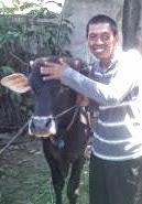 FOTO TUKANG BECAK BERNAMA BAMBANG KURBAN SAPI IDUL ADHA 2013 HARGA 13 JUTA