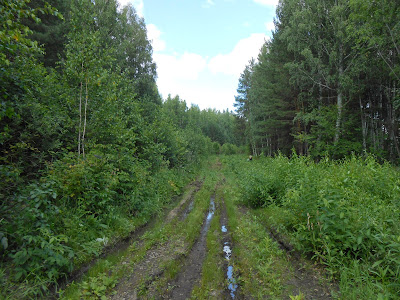Дорога по просеке с западной стороны Пименова пруда