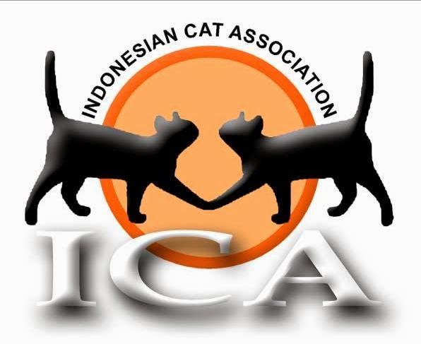 Pet Shop Persia Daftar Harga Kucing Persia