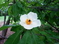 7 Bunga Paling Langka di Dunia
