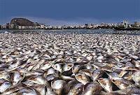 mortandade, peixes, ecologia