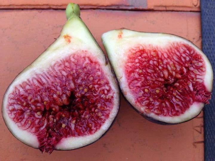 Figs : Col de dame Noire