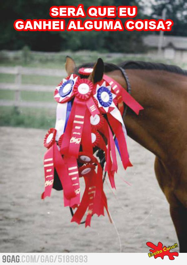 cavalo, vencedor, campeao, rodeio, corrida, eeeita coisa