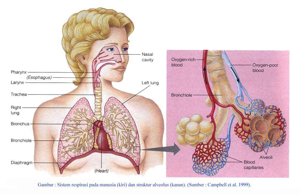 Ayo Belajar Ipa Organ Tubuh Manusia Dan Hewan