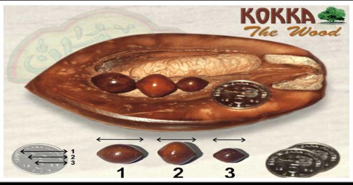 BlOgKuWbloGkUw: Sejarah kayu Koka