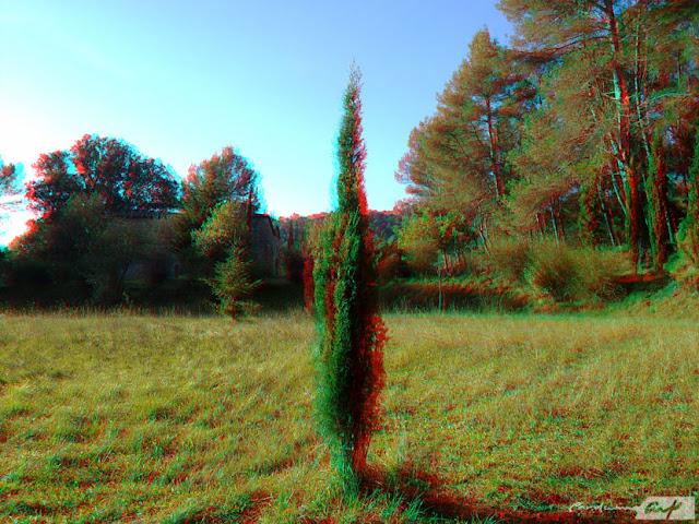 cipres campo 3D