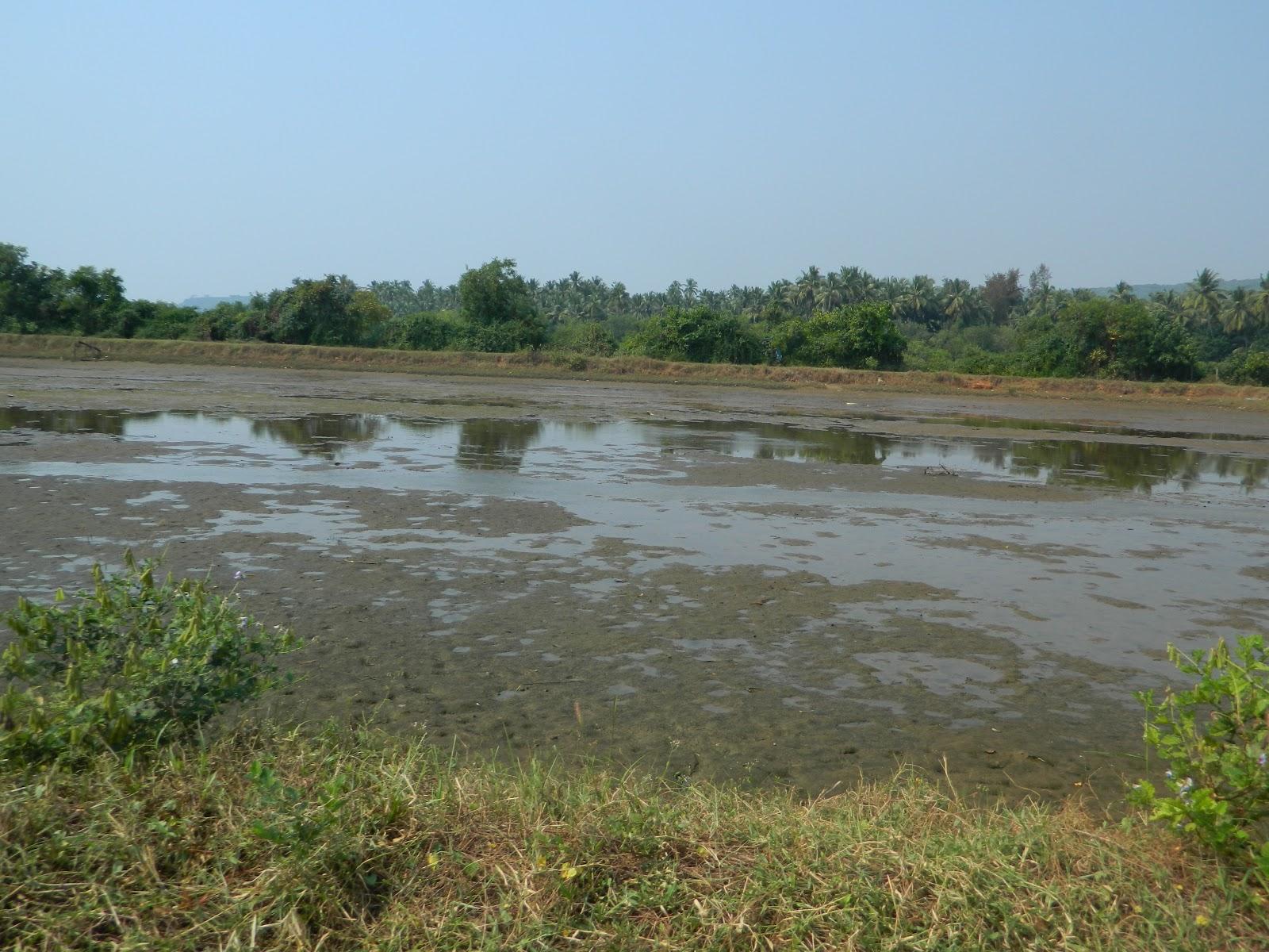 Mera Gaon Mera Base Kochra Konkan Maharashtra Present Condition Of Kochra Village