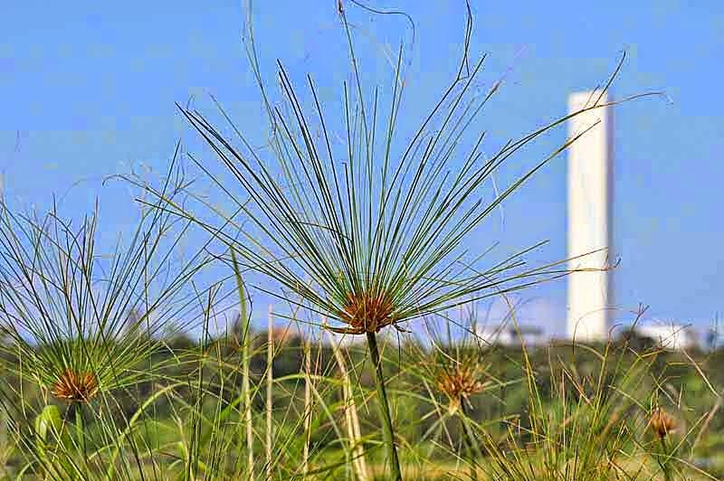 powerplant, papyrus plant