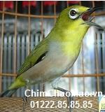 Chim Chao Mao, Chim Vanh Khuyen Mai