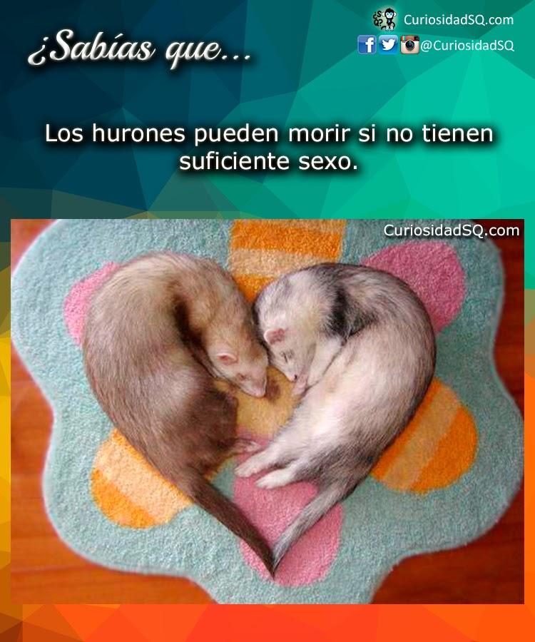 Hamster ruso reproduccion asexual