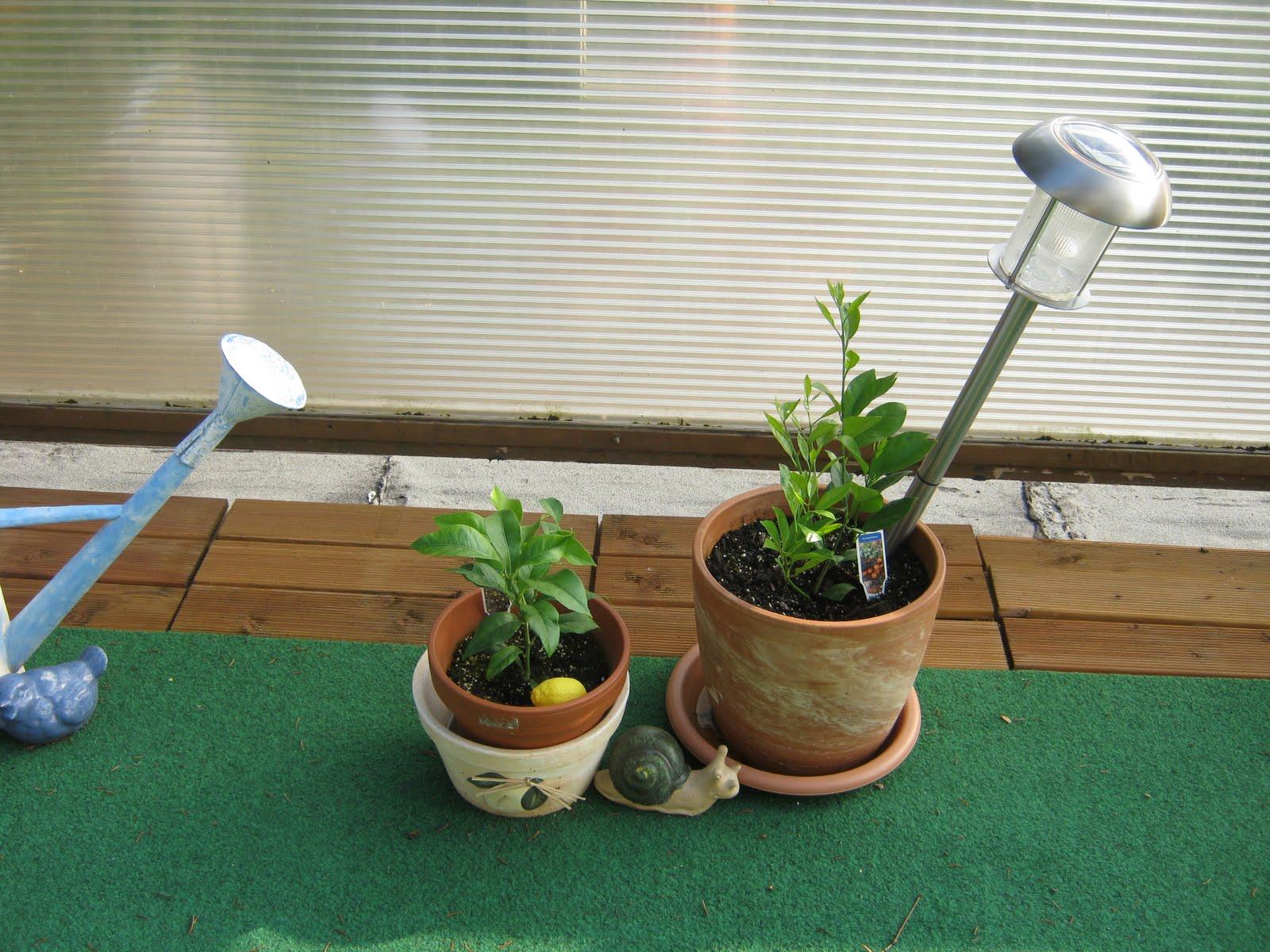 Baldur Gartenversand baldur gartenversand pflanzen fr hjahr