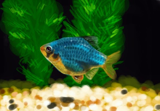 Tiger barb fish fun animals wiki videos pictures stories for Tiger barb fish