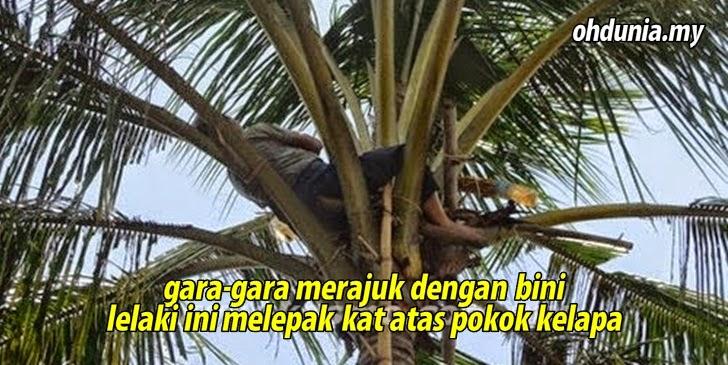 Gara-Gara Merajuk Dengan Bini, Lelaki Ini Melepak Atas Pokok Kelapa