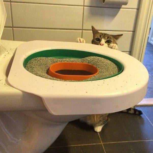 Funny cats - part 179, funny cat pictures, cat photo, adorable cat