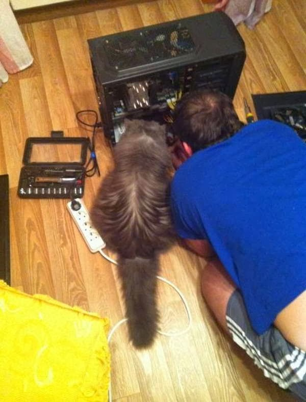 Funny cats - part 78 (35 pics + 10 gifs), cat pics, cat helps human fix computer
