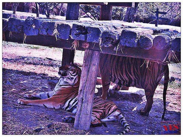 safari park bangkok