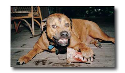 aggressive-dog-behavior-around-food
