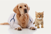Need Financial Help Paying Vet Bills?